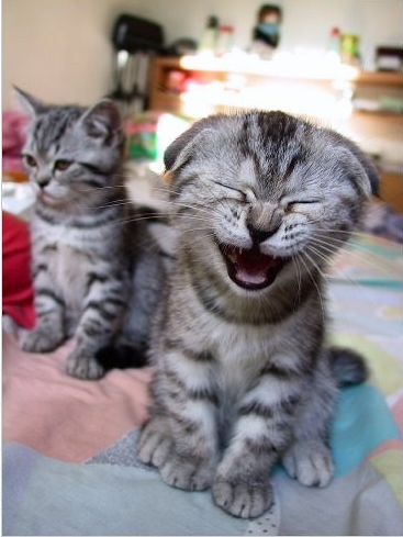 kitten laugh